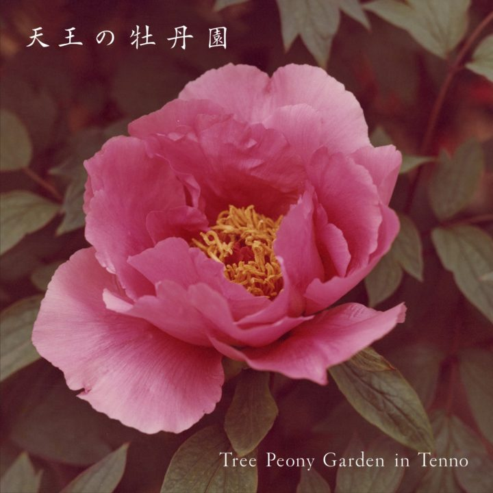 My New Photo Book / Exhibition and Concerts/  「Tree Peony Garden in TENNO」 and 「TENJOGAWA Riverside Concerts」